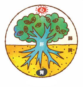 五臟六腑 肝木